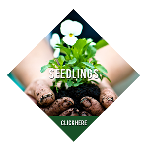 Seedligns2